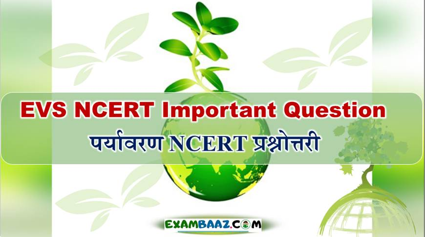 EVS NCERT Important Question For CTET Exam