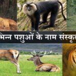 विभिन्न पशुओं के नाम संस्कृत में    Animals Name In Sanskrit and Hindi\English