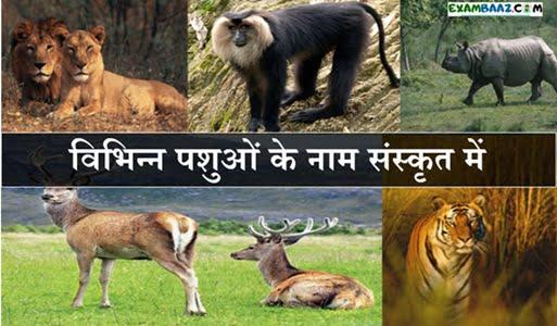 Animals Name In Sanskrit and Hindi