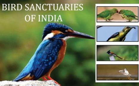 Bird Sanctuary In India