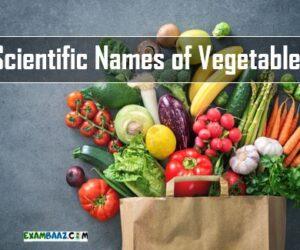 Scientific Names of Vegetables || सब्जियों के वैज्ञानिक नाम
