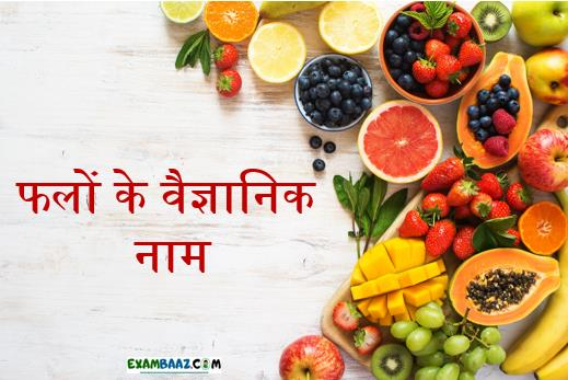 List of All Scientific Name of Fruits