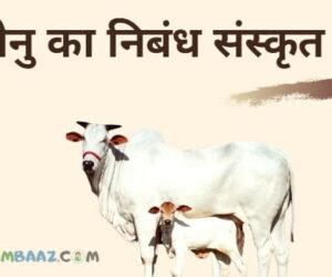संस्कृत में गाय (धेनु) का निबंध  || Essay on Cow In Sanskrit