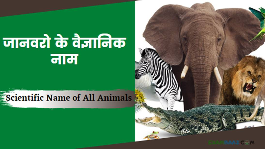 Scientific Name of All Animals In Hindi